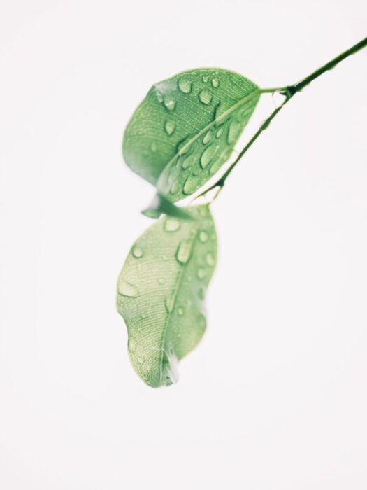 photography-of-wet-green-leaves-1650627